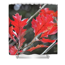 Shower Curtain featuring the photograph Autumn Leaves by Peggy Hughes