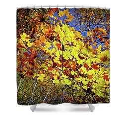 Shower Curtain featuring the photograph Autumn Light by Tatsuya Atarashi