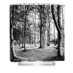 Autumn Lights Shower Curtain