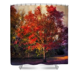 Autumn Maple Shower Curtain by Jessica Jenney