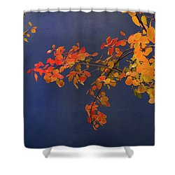 Shower Curtain featuring the photograph Autumn Matinee by Theresa Tahara