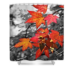 Autumn On Black And White Shower Curtain by Kaye Menner