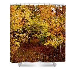 Autumn Palette Shower Curtain by Carol Cavalaris