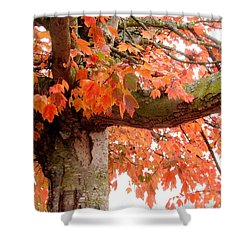 Autumn Pink Leaves Shower Curtain