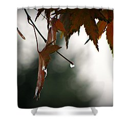 Shower Curtain featuring the photograph Autumn Raindrops by Katie Wing Vigil