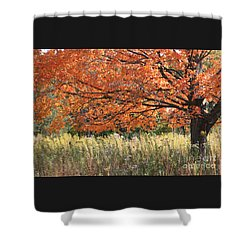 Autumn Red   Shower Curtain