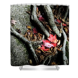 Autumn Roots Shower Curtain