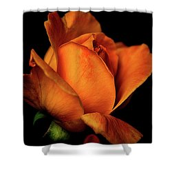 Autumn Rose Shower Curtain by Julie Palencia