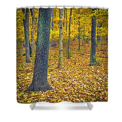 Shower Curtain featuring the photograph Autumn by Samuel M Purvis III