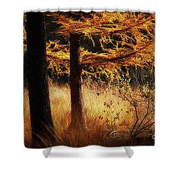 Shower Curtain featuring the photograph Autumn Scene In A Dark Forest by Nick Biemans