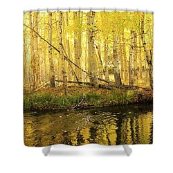Autumn Soft Light In Stream Shower Curtain