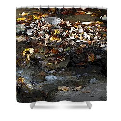 Shower Curtain featuring the drawing Autumn Soup by Diane E Berry
