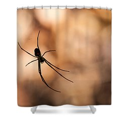 Autumn Spider Shower Curtain