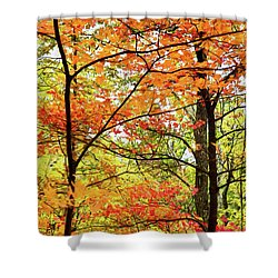 Autumn Splendor Fall Colors Leaves And Trees Ap Shower Curtain