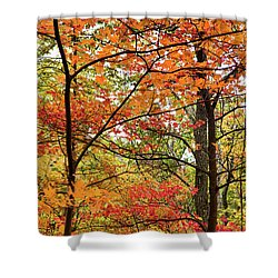 Autumn Splendor Fall Colors Leaves And Trees Shower Curtain by Dan Carmichael