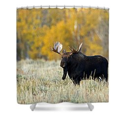 Autumn Splendor II Shower Curtain