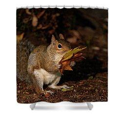 Autumn Squirrel Shower Curtain by Matt Malloy
