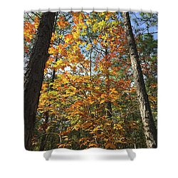 Autumn Sunday Shower Curtain
