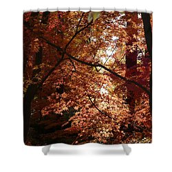 Autumn Sunshine Poster Shower Curtain by Carol Groenen
