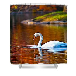 Autumn Swan Lake Shower Curtain by Keith Allen