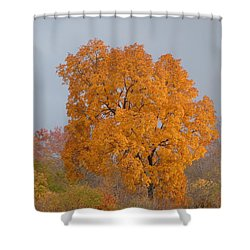 Autumn Tree Shower Curtain by Donald C Morgan