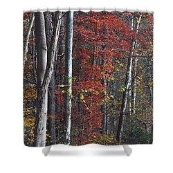 Autumn Trees 8261c Shower Curtain