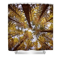 Autumn Treetops Shower Curtain
