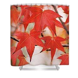 Autumn Trio Shower Curtain