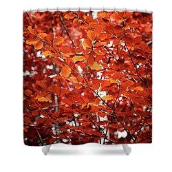 Autumn Triumph Shower Curtain