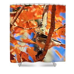 Autumn Warbler Shower Curtain