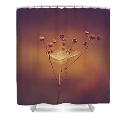 Autumn Web Shower Curtain by Shane Holsclaw