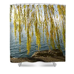Autumn Willow Shower Curtain by Colleen Williams
