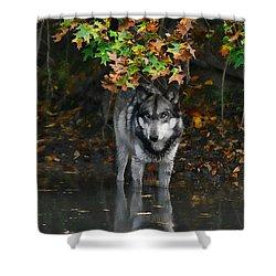 Shower Curtain featuring the photograph Autumn Wolf by Shari Jardina