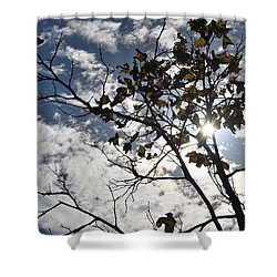 Autumn Yellow Back-lit Tree Branch Shower Curtain