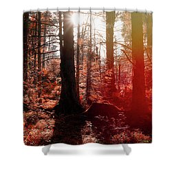 Autumnal Afternoon Shower Curtain