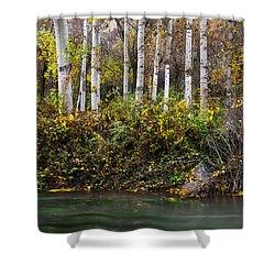 Autumnal Birches Shower Curtain by Yuri Santin