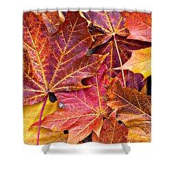 Autumnal Carpet Shower Curtain by Meirion Matthias