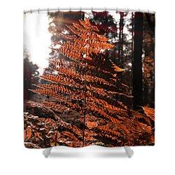 Autumnal Evening Shower Curtain
