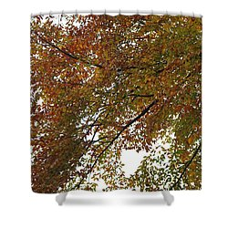 Autumn's Abstract Shower Curtain by Deborah  Crew-Johnson