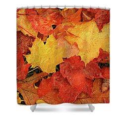 Autumns Gifts Shower Curtain