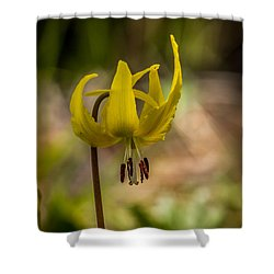 Shower Curtain featuring the photograph Avalanche Lily  by Robert Bales