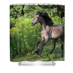 Avante In Action Shower Curtain