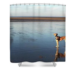 Ava's Last Walk On Brancaster Beach Shower Curtain