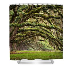 Avenue Of Oaks - Charleston Sc Plantation Live Oak Trees Forest Landscape Shower Curtain