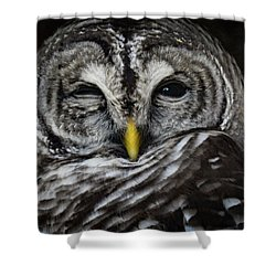 Avery's Owls, No. 11 Shower Curtain