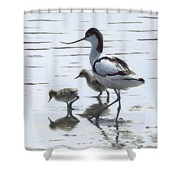 Avocet And Chicks Shower Curtain by Clive Meredith