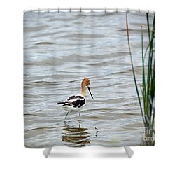 Avocet  Shower Curtain