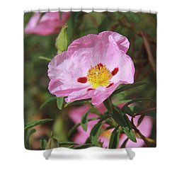 Shower Curtain featuring the photograph Awaiting The Bee by Suzanne Oesterling