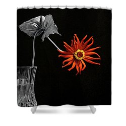 Awaken Shower Curtain