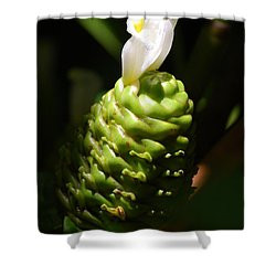 Shower Curtain featuring the photograph Awapuhi Plant by Debbie Karnes